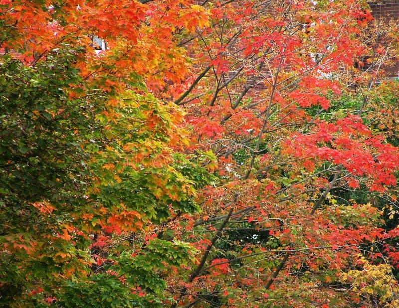 The splendor of the autumn palette royalty free stock photo