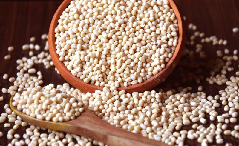 Split Bengal Gram Crop obrazy stock