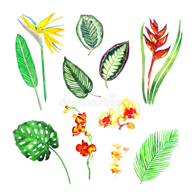 Split philodendrom, Areca palm, Maranta striped leaves, strelezia yellow and red, colorful orchids flowers collection stock illustration