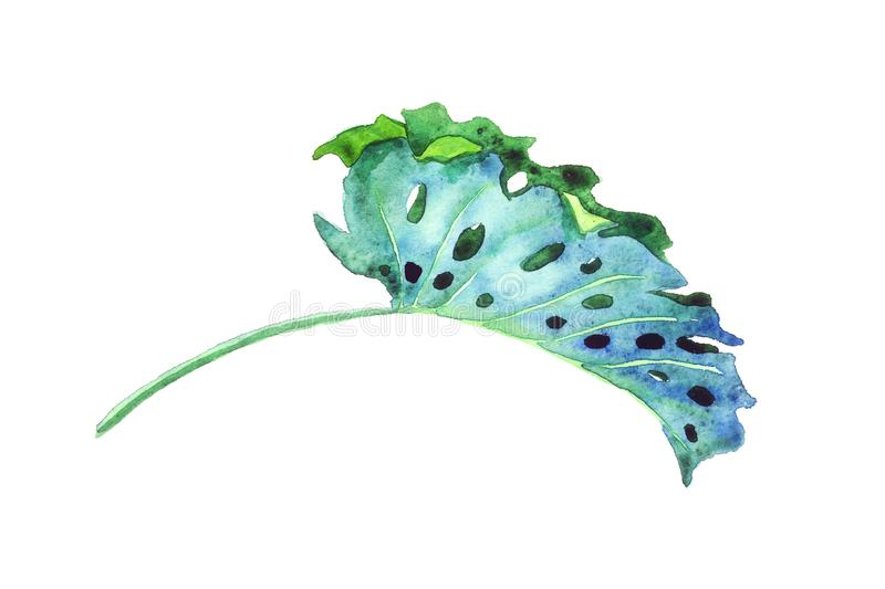 Split philodendrom leaf isolated side view on white hand painted watercolor illustration, design element vector illustration