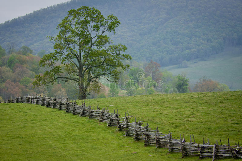 Split rail fence crosses a green mountain pasture. stock photo