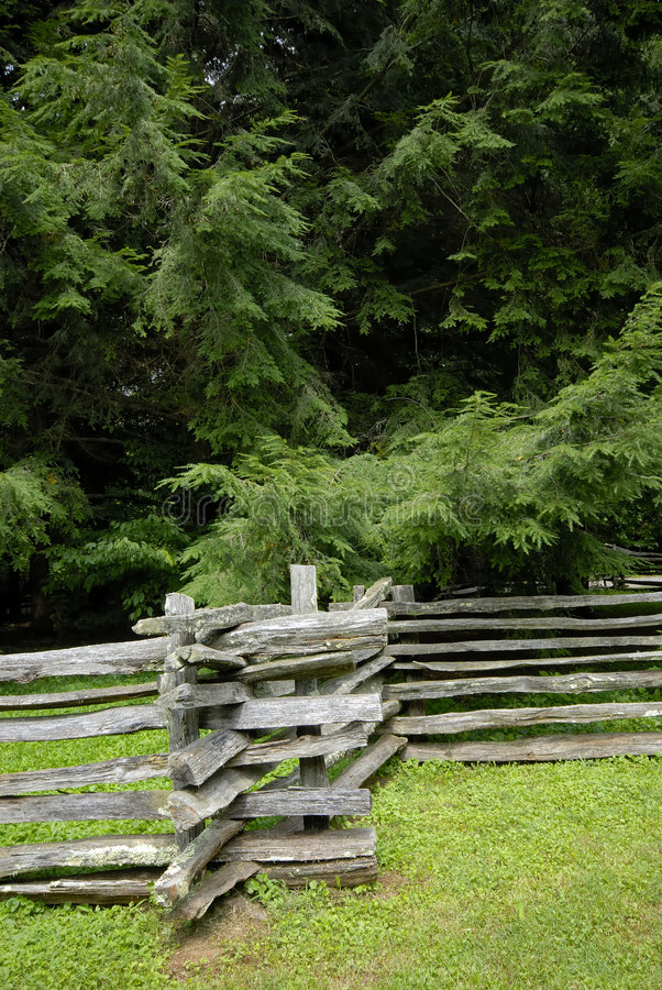 Split Rail Fence and Pines stock photography