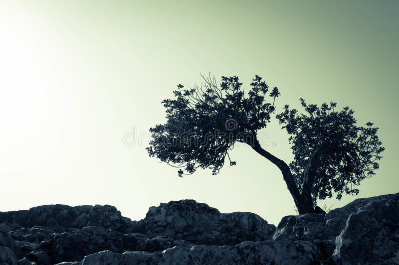 Split tree scenario stock photos