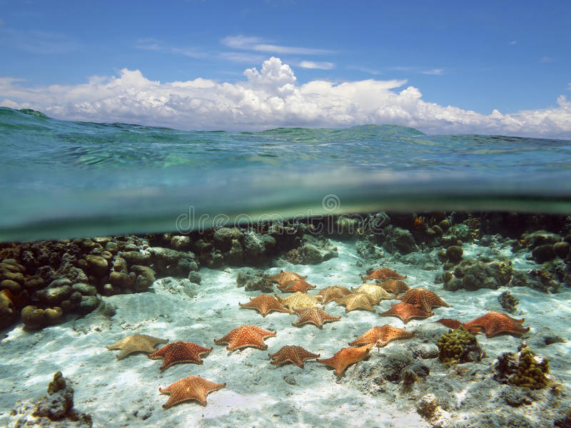 Split view with sky and underwater starfish. Split view with sky and clouds above, and underwater, many cushion starfish on sandy ocean floor stock images