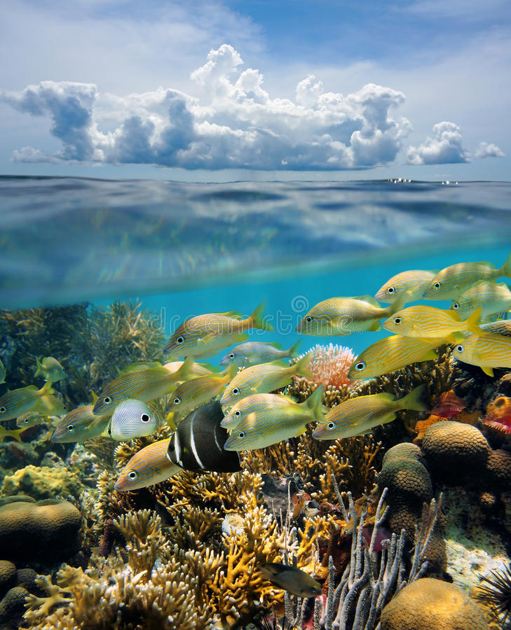 Split view underwater coral reef and cloud. Split view of tropical underwater seabed with shoal of fish in a coral reef and above water surface, sky with cloud royalty free stock image