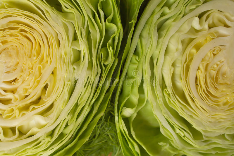 Split white cabbage royalty free stock images