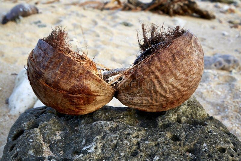 Splitted-Kokosschale, die auf einem Stein liegt lizenzfreie stockfotografie