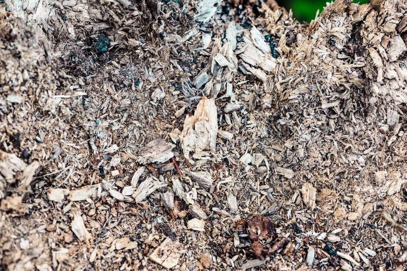 Splitter-Beschaffenheit auf einem Verrottungsstumpf Beschaffenheit von Sägespänen stockfotografie