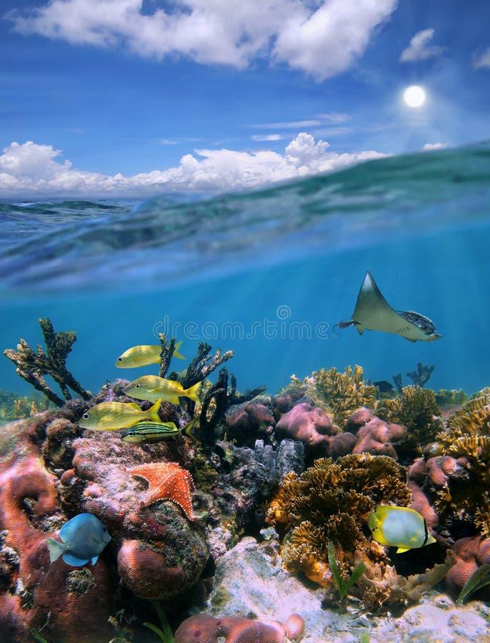 Splittring beskådar med den undervattens- skyen och härliga korallreven royaltyfria foton