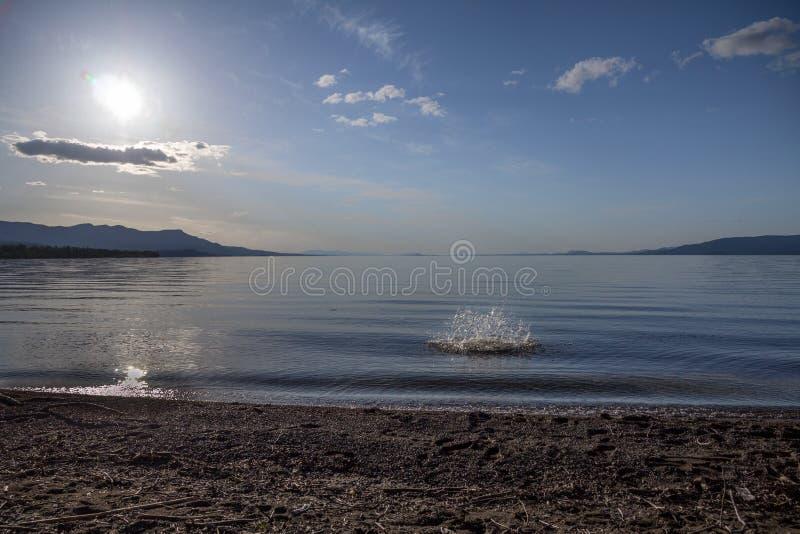 Sploosh! Una grande pietra getta sullo spruzzo Stuart Lake, BC immagine stock