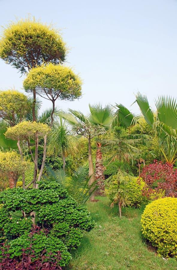 Społeczeństwo Garden-1 obraz royalty free