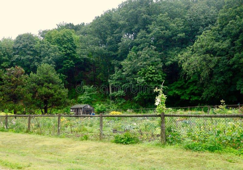 Społeczność ogród w mieście Portlandzka Maine doliny ulica obraz royalty free