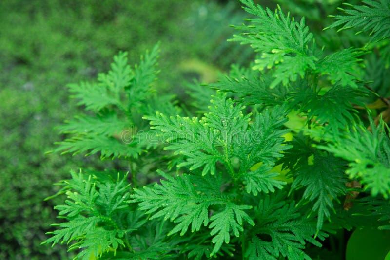 Spodnie drzewny kwiat obraz stock