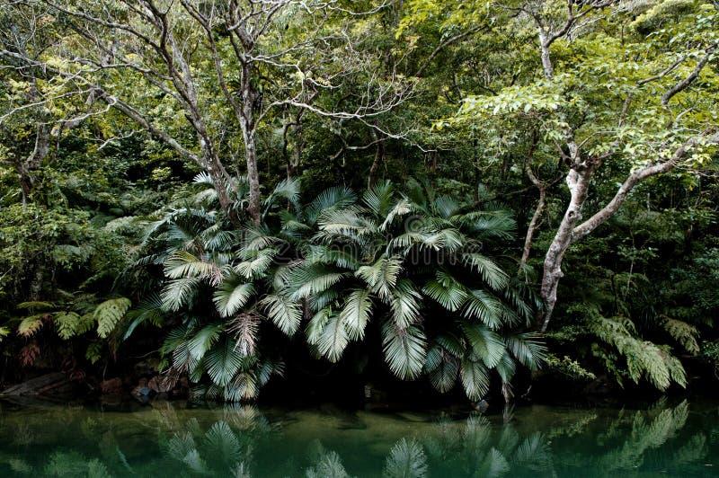 Spoed groen mangrove bos exotisch tropisch bos van Iriomote, T royalty-vrije stock foto's