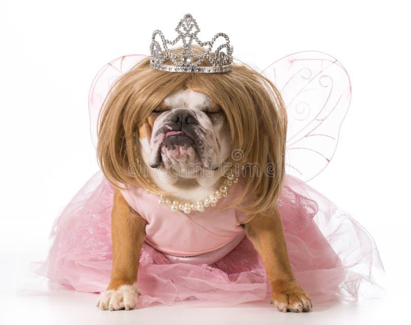 Download Spoiled dog stock image. Image of princess, crown, animal - 42361791