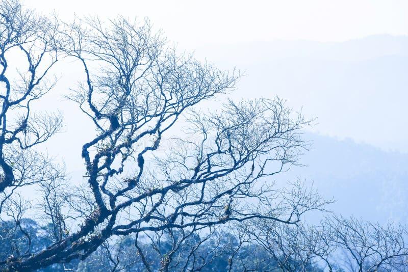Spokój jesieni las, sztuki nagie gałąź drzewa kształt, zimni gór tła B??kitny brzmienie obraz royalty free