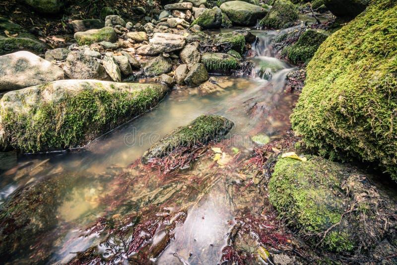 Spokój woda rzeczna w halnym lesie fotografia stock