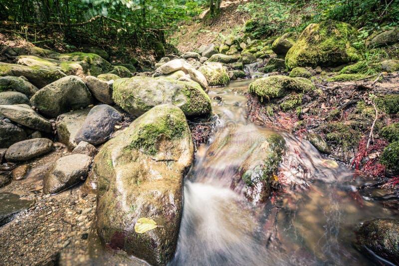 Spokój woda rzeczna w halnym lesie obrazy royalty free