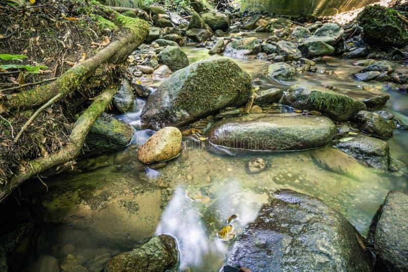 Spokój woda rzeczna w halnym lesie fotografia royalty free