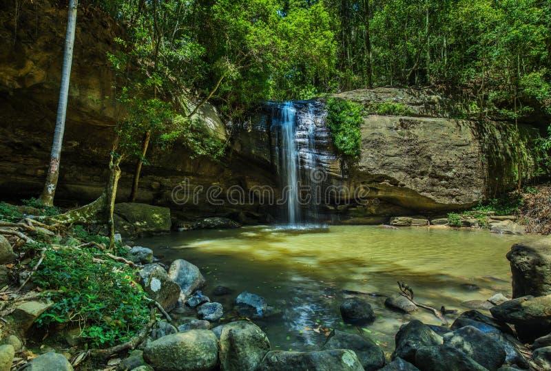 Spokojów spadki i pływacka dziura w Buderim lasu parku, Sunshin obraz royalty free
