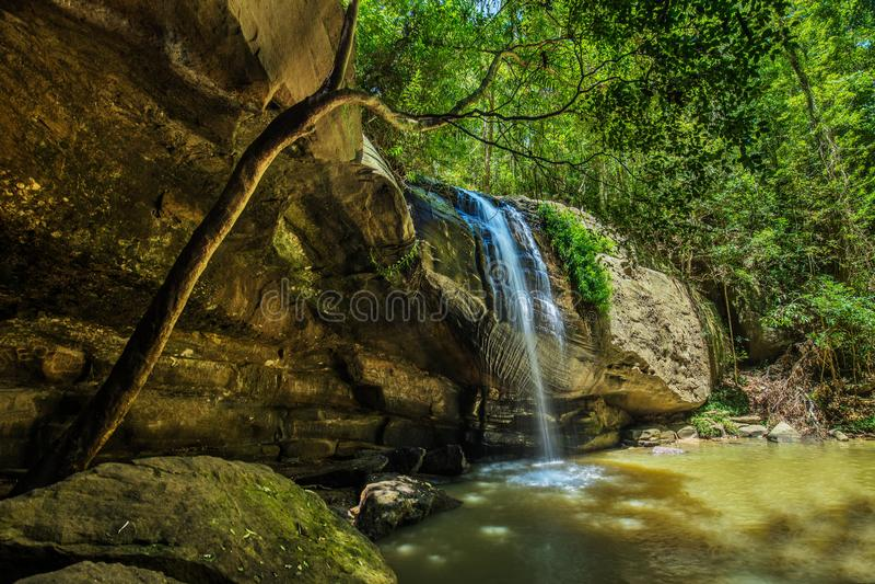 Spokojów spadki i pływacka dziura w Buderim lasu parku, Sunshin obrazy royalty free