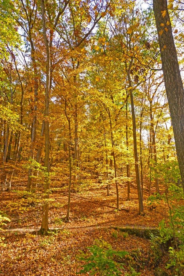 Spokojna ścieżka Przez cały spadku lasu zdjęcia stock