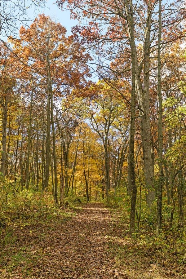 Spokojna ścieżka w lesie zdjęcie stock