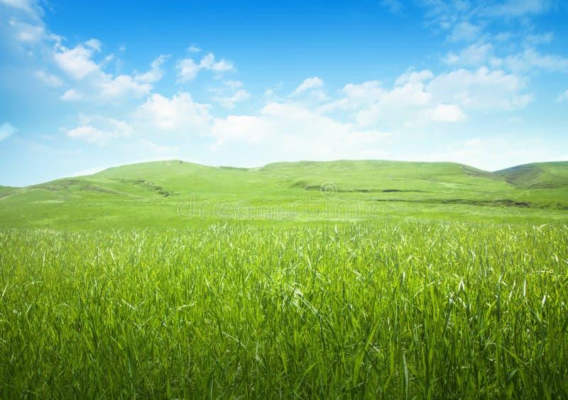 Spokojna górkowata łąka zdjęcie stock