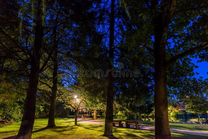 Spokojna noc w pustym parku z wysokimi drzewami, ławki, uliczny li obraz stock