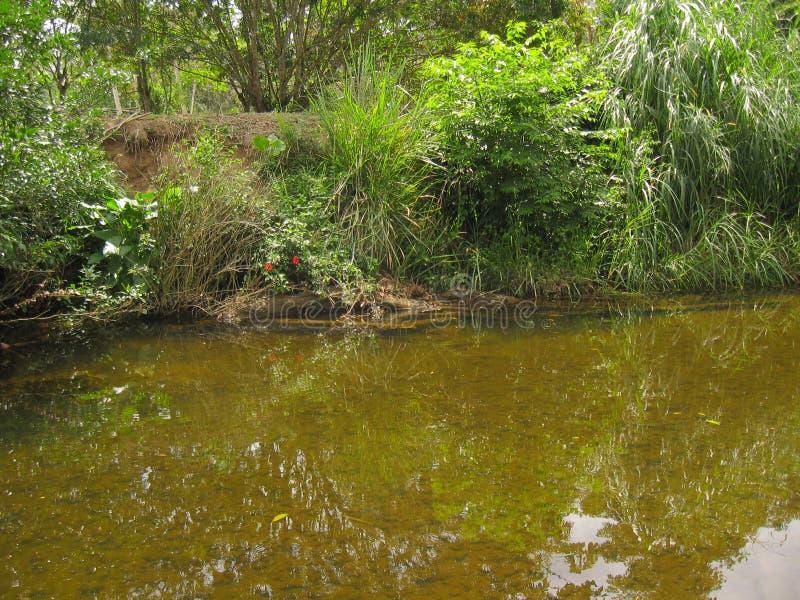 Spokojna rzeka obraz stock