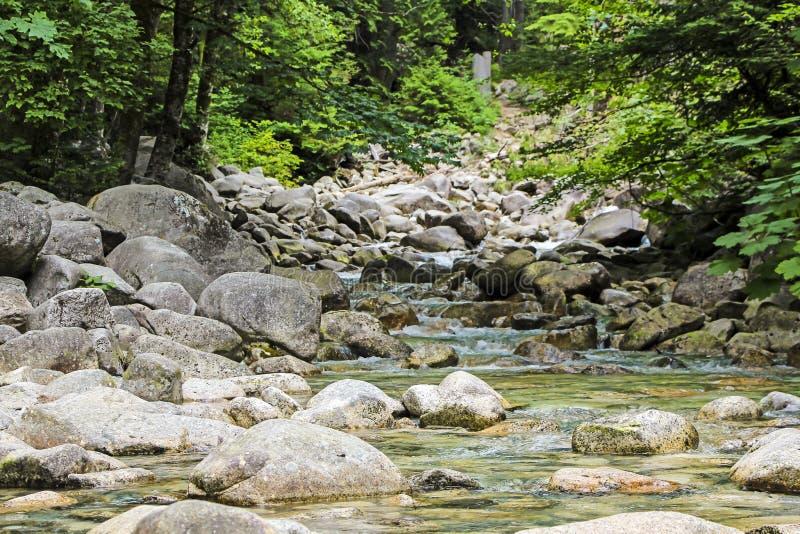 Spokojna rzeka i kamienie obraz royalty free