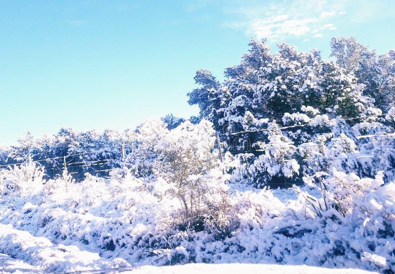 Spokojny śnieżny pole obrazy royalty free