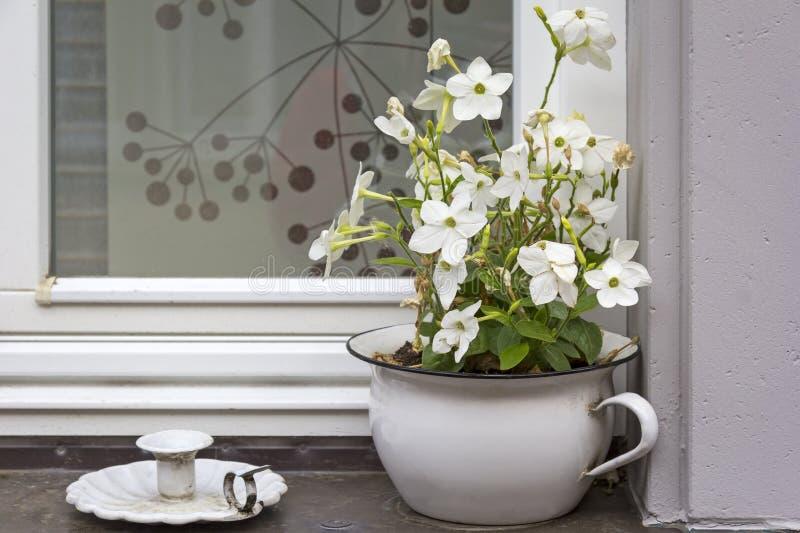 Spokojny życie na windowsill z kwiatu garnkiem fotografia royalty free