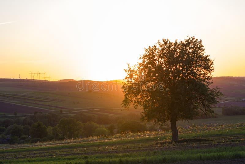 Spokojny i pokojowy widok piękny duży zielony drzewo przy zmierzchem gr obrazy stock