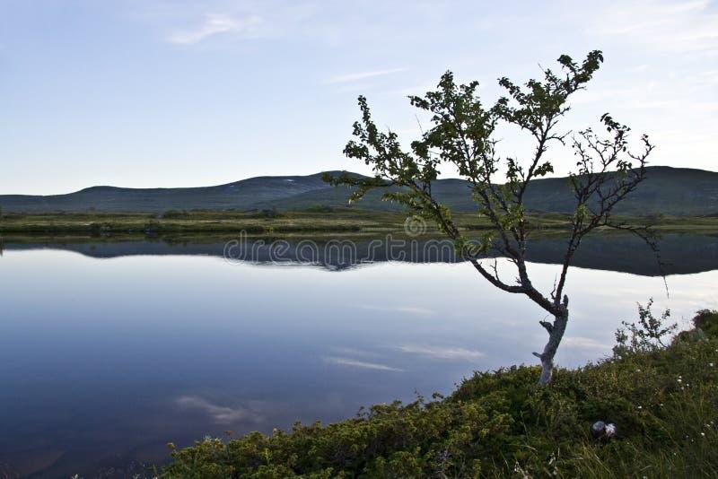 spokojny jezioro obrazy royalty free