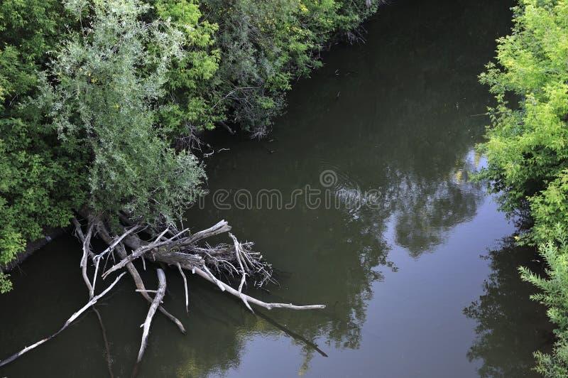 Spokojny lato wiecz?r na rzece Odbicie zielone i zapadnięte gałąź w odzwierciedlającej powierzchni woda obrazy stock