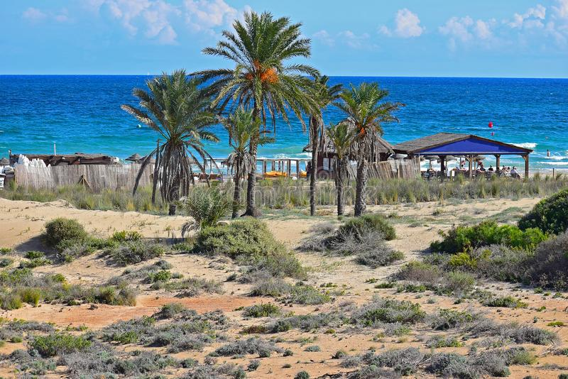 Spokojny plaża bar Za drzewkami palmowymi fotografia stock