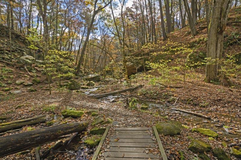 Spokojny strumień Przez spadku lasu zdjęcie royalty free
