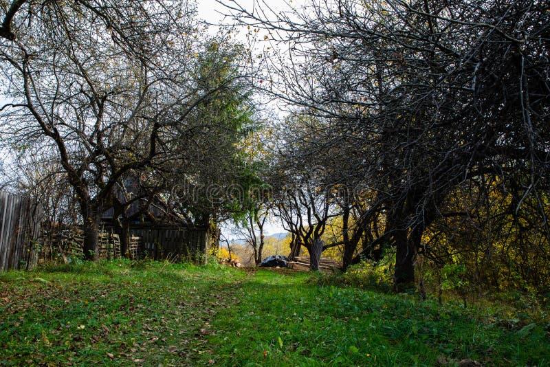 Spokojny widok zielona ścieżka z drzewami zdjęcia stock