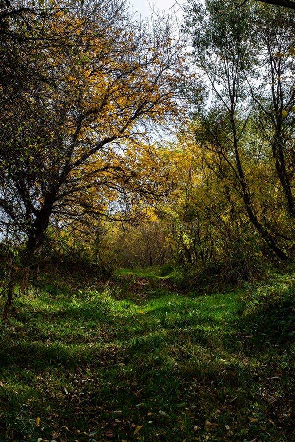 Spokojny widok zielona ścieżka z drzewami fotografia stock