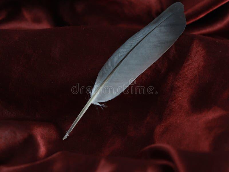 Spoletta calligrafica in a piena vista sul tessuto di seta rosso del raso per arte e la calligrafia fotografie stock