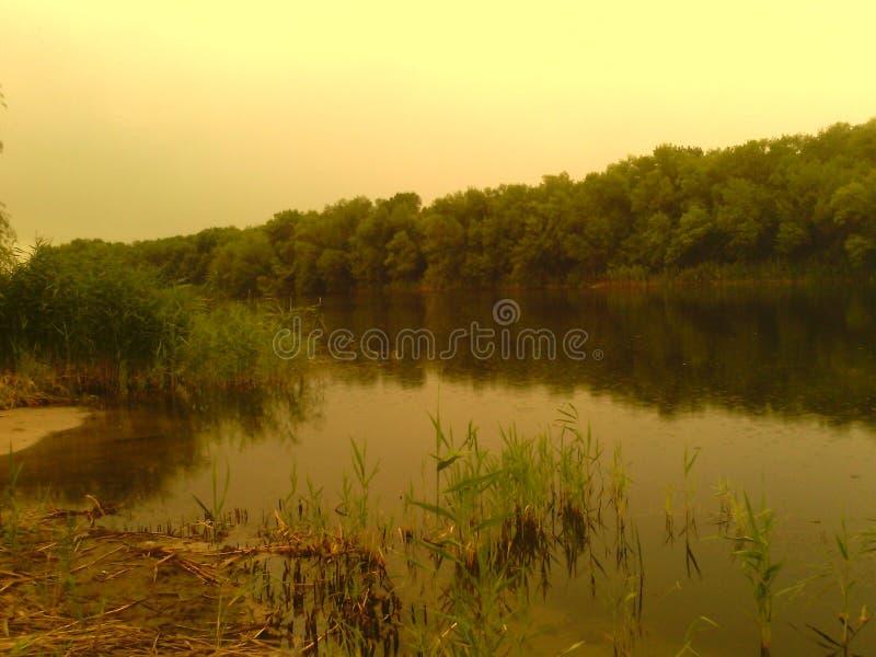 Sponda del fiume con le canne e gli alberi immagini stock