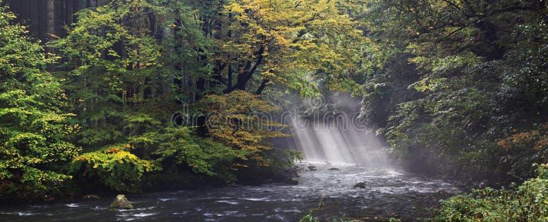 Sponda del fiume di estate o di autunno con le foglie del faggio Le foglie verdi fresche sui rami al disopra della superficie fan fotografie stock libere da diritti