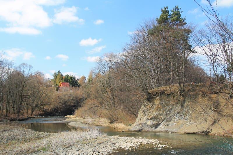 Sponda del fiume insidiata fotografia stock libera da diritti