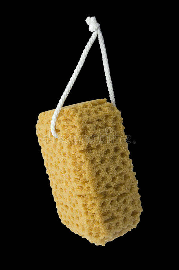 Sponge. royalty free stock photography