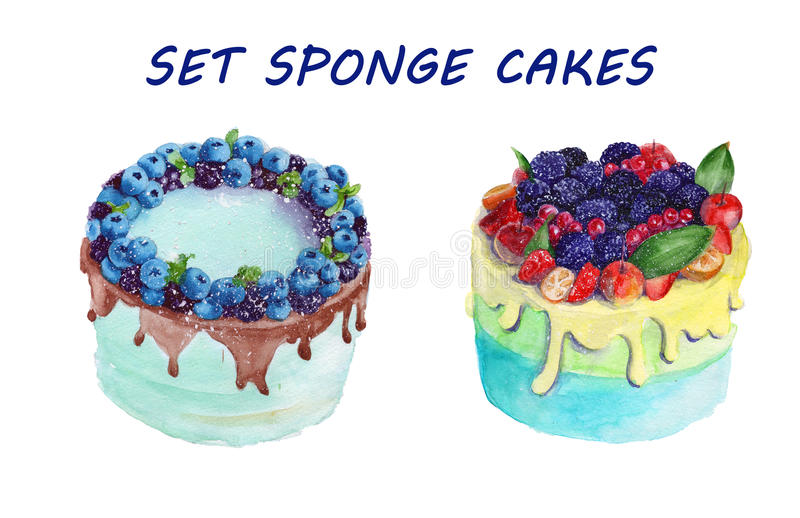 Sponge cake with fruit. . watercolor vector illustration