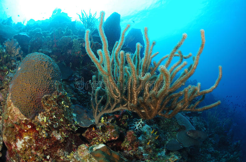 Sponges in coral reef stock images