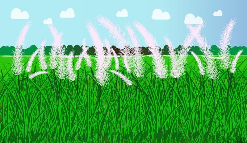 Spontaneum för Autumn Kans gräsSaccharum med himmelbakgrund royaltyfria foton