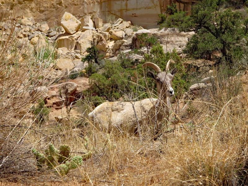Spook in de woestijn royalty-vrije stock fotografie