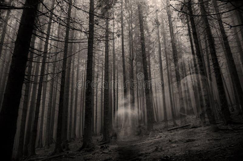 Spook in het bos royalty-vrije stock foto's